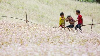 Mùa hoa tam giác mạch ở Hà Giang.