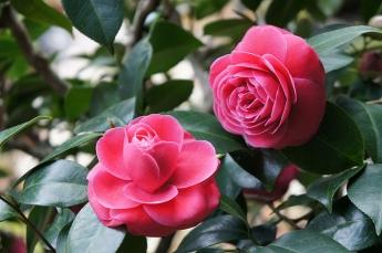 9 loài hoa tượng trưng cho tình bạn.